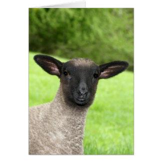 Frågvist Lambhälsningkort Hälsningskort