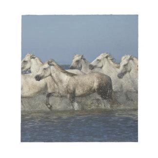 Frankriken Camargue. Hästspringa till och med bred Anteckningsblock