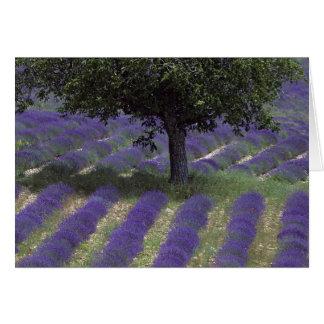 Frankriken PACA, Alpes de Haute Provence, Hälsningskort