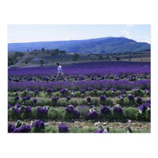 Frankriken PACA, Alpes de Haute Provence som är Vykort