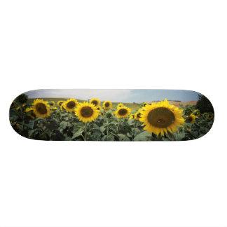 Frankriken Provence, beskådar av solrosfält Skateboard Bräda 20,5 Cm