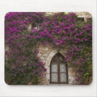 Frankriken Provence, Eze. Ljusa rosor Musmattor