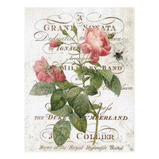Fransk botanisk rosa vykort för vintage