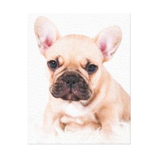 Fransk bulldog. canvastryck