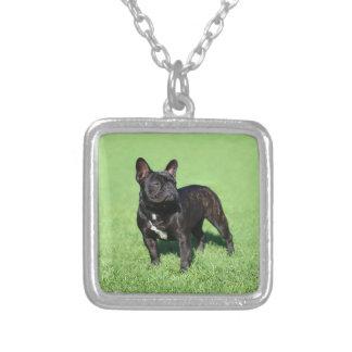 Fransk bulldogg 2 silverpläterat halsband