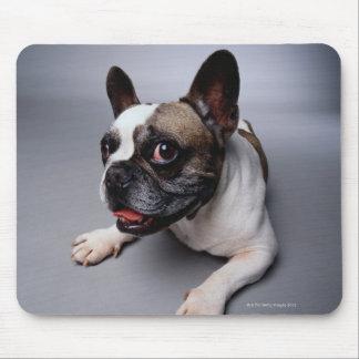 Fransk bulldogg musmatta