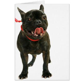 Fransk bulldogg OBS kort