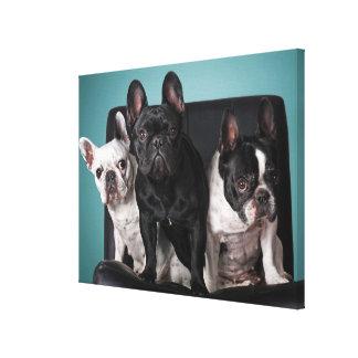 Fransk bulldogg på stolen canvastryck
