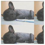 fransk bulldogg puppy.png tyg