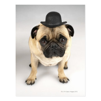 Fransk bulldogg som ha på sig kastaren, skjuten vykort