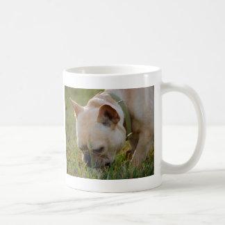 Fransk bulldogg vit mugg