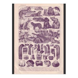 Fransk encyklopedi 1920, djur och päls vykort