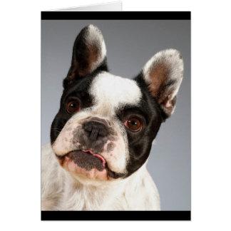 Franska den tomma bulldoggvalphunden noterar OBS kort