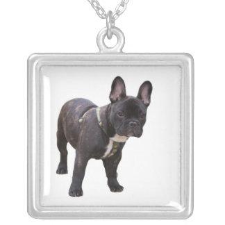 Franskt bulldogghalsband, gåvaidé silverpläterat halsband