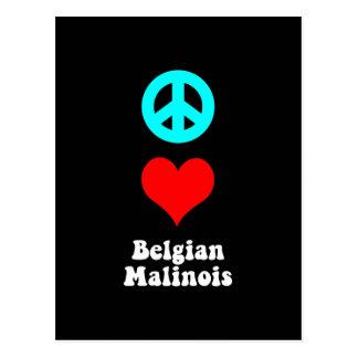 Fredkärlekbelgare Malinois Vykort