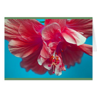 Frodig hibiskus hälsningskort