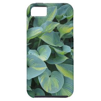 Frodiga gröna hostaväxtlöv iPhone 5 cover