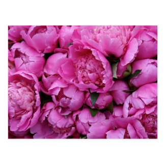 Frodiga rosa pionblommor vykort