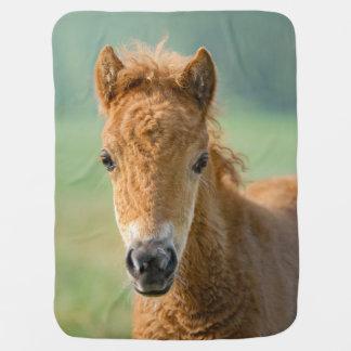 Frontal foto för gulligt för Shetland ponnyföl Bebisfilt