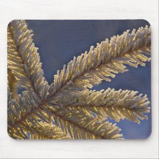 Frost på det vintergröna träd, Homer, Alaska Musmatta