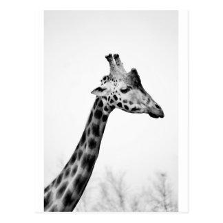 Fru giraff vykort