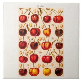 Frukt för körsbär för körsbärsröda variationer för kakelplatta