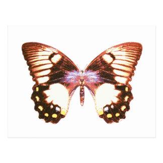 FruktträdgårdSwallowtail fjäril Vykort