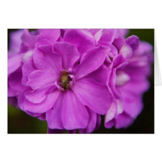 Fuchsia blomma hälsningskort