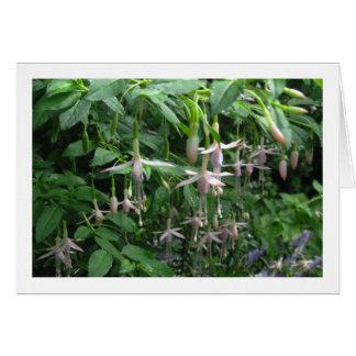 Fuchsia shrub - vitriddare pärla hälsningskort