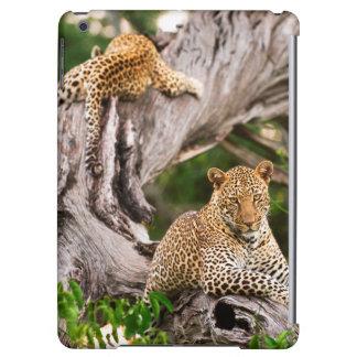 Full fullvuxen unge för Leopard (pantheraen