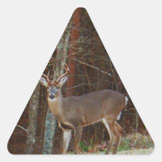 Fullvuxen hankronhjort-/bockhjortOakkamouflage Triangelformat Klistermärke