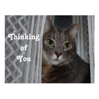 Fundersamt kattanpassningsbarfoto vykort