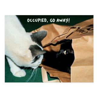 Gå bort, upptaget! Roliga katter Vykort