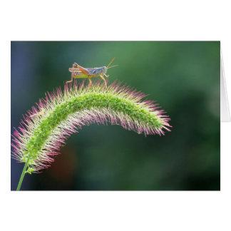 Gå på luft - gräshoppa - färg OBS kort