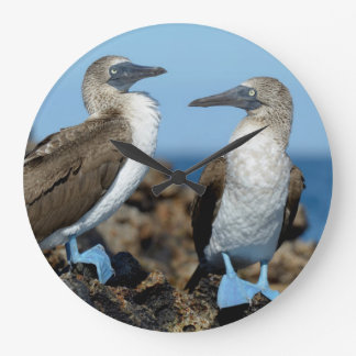Galapagos öar, Isabela ö Stor Klocka
