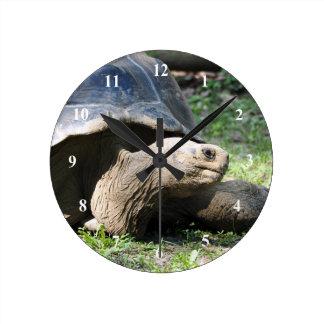 Galapagos sköldpadda 586 tar tid på rund klocka