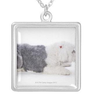 Gammal engelsk Sheepdog på vitbakgrund Silverpläterat Halsband