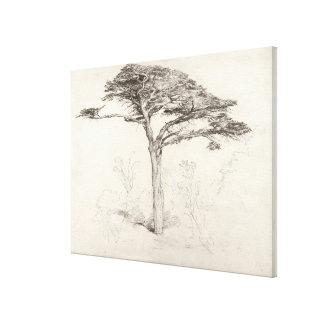 Gammalt cederträträd i botanisk trädgård, Chelsea, Canvastryck