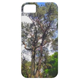 Gammalt grästrädfodral iPhone 5 fodraler