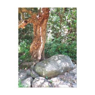 Gammalt mangoträd canvastryck