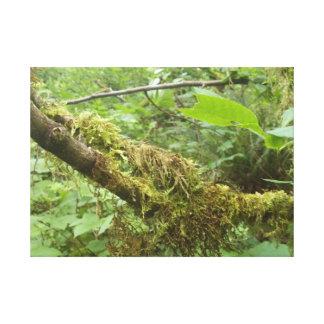 Gammalt träd canvastryck