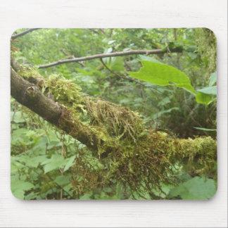 Gammalt träd musmatta