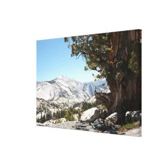 Gammalt träd på den Yosemite nationalparken Canvastryck
