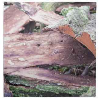 Gammalt trasigt skäll som moss-täckas tygservett