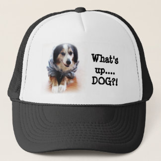 Gangsta hund som ha på sig hoodien keps