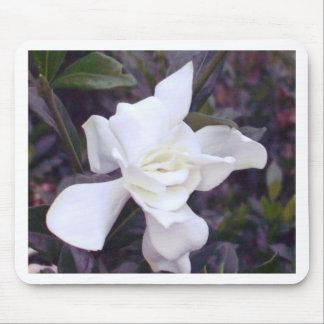 Gardenia tonar musmatta