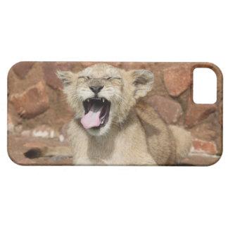Gäspa den lejona ungen iPhone 5 Case-Mate skydd