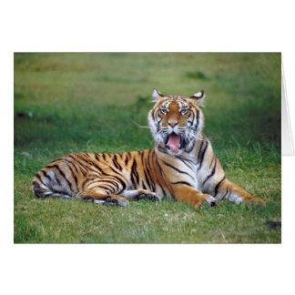 Gäspa tigern hälsningskort