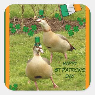 Gäss som utför en lite irländsk dans fyrkantigt klistermärke