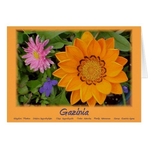 Gazinia tack hälsnings kort